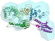 Structural characterization of a complex that mediates termination of protein synthesis